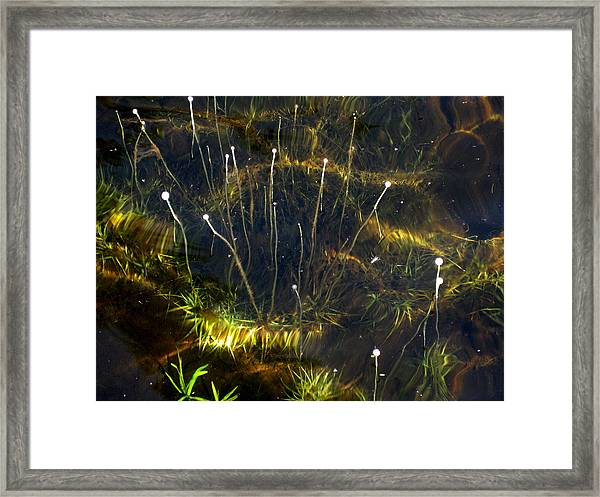 Underwater Scene Framed Print by Carolyn Reinhart