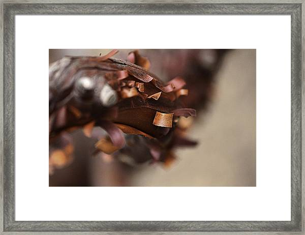 Unfold The New Framed Print by Luna Curran