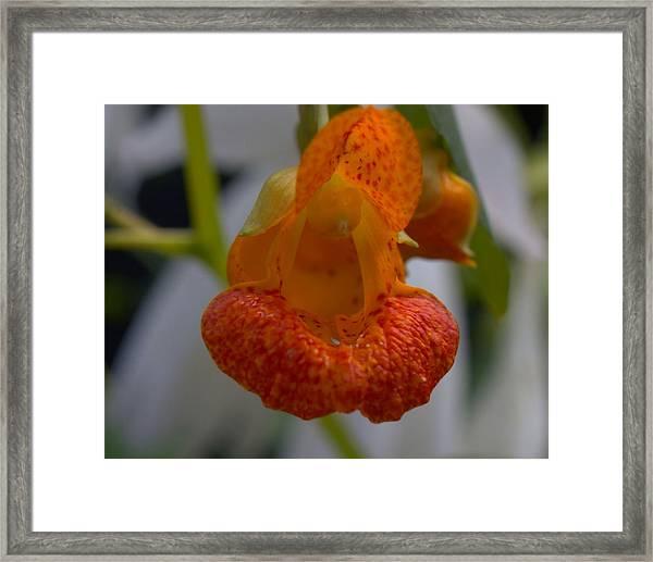 Unidetified Wildflower Framed Print