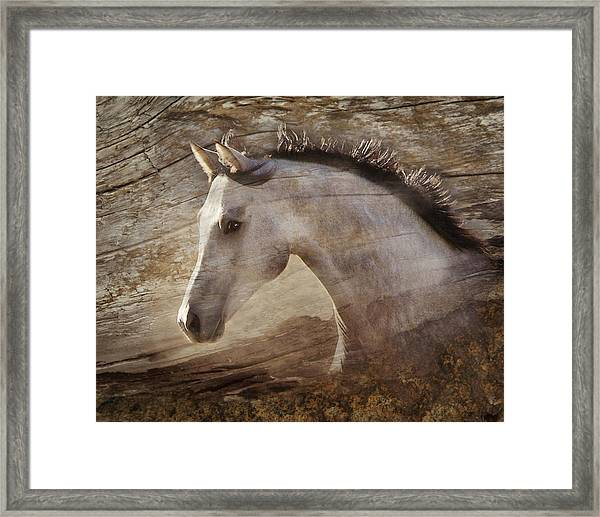 Framed Print featuring the photograph UNO by Melinda Hughes-Berland