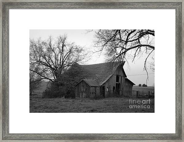 Until The Cows Come Home Framed Print