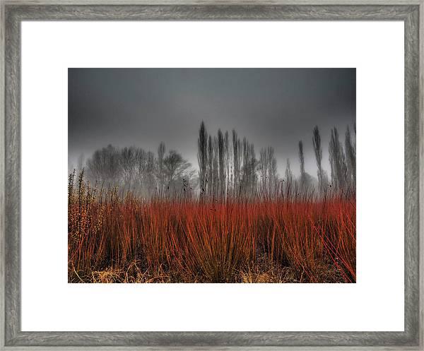 Untitled Framed Print by Ja Ruiz Rivas
