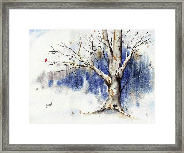 Untitled Winter Tree Framed Print