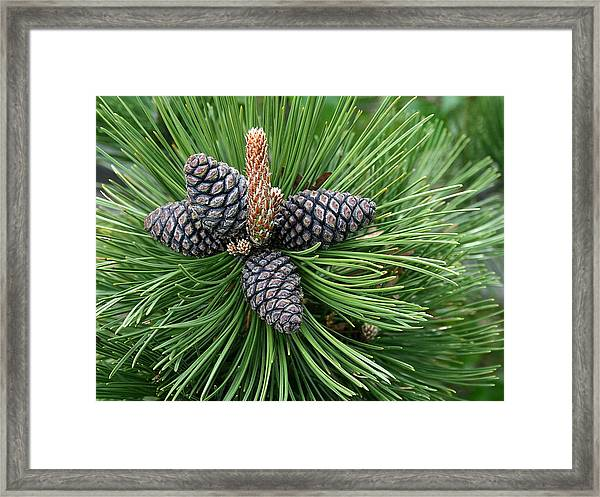 Up Cone Framed Print