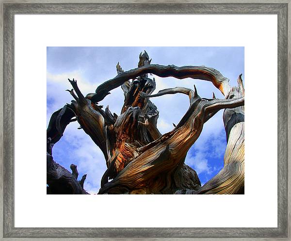 Uprooted Beauty Framed Print