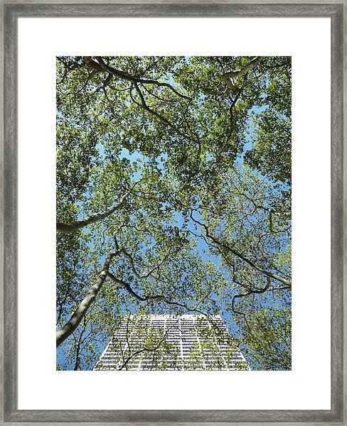 Urban Growth Framed Print