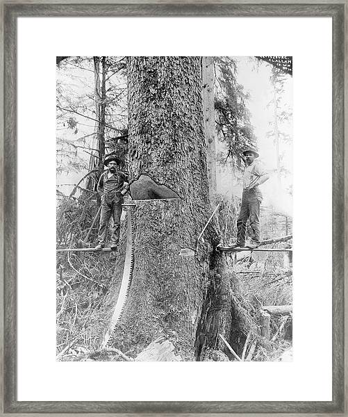 Us Forestry Framed Print by Library Of Congress