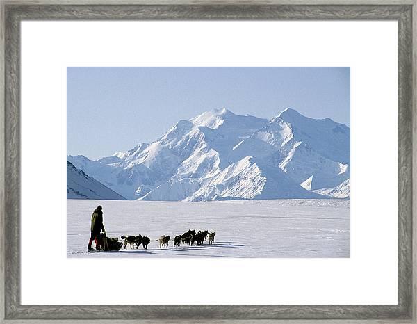 Usa, Alaska, Sled Dogs, Park Ranger Framed Print
