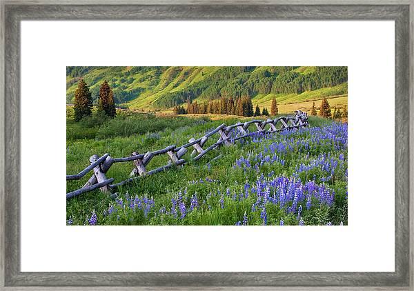Usa, Colorado Lupines And Split Rail Framed Print