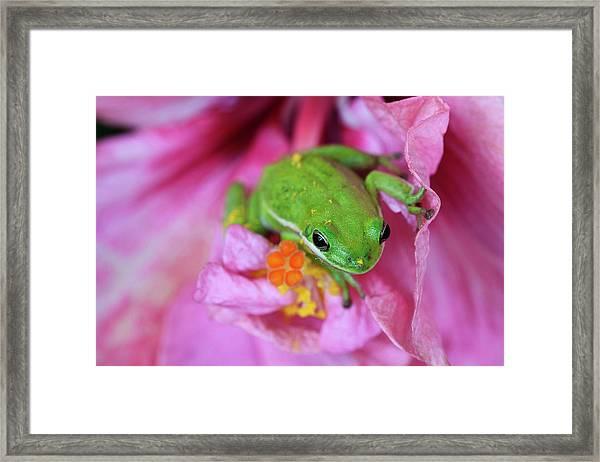 Usa, Georgia, Savannah, Green Frog Framed Print