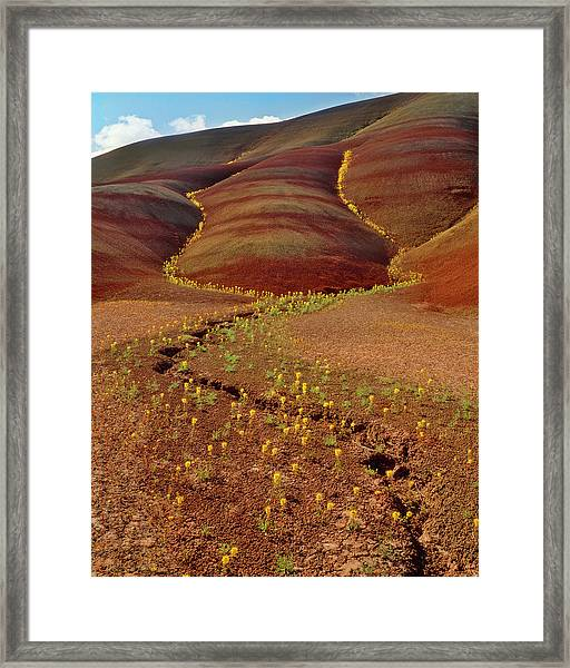 Usa, Oregon, Painted Hills In John Day Framed Print