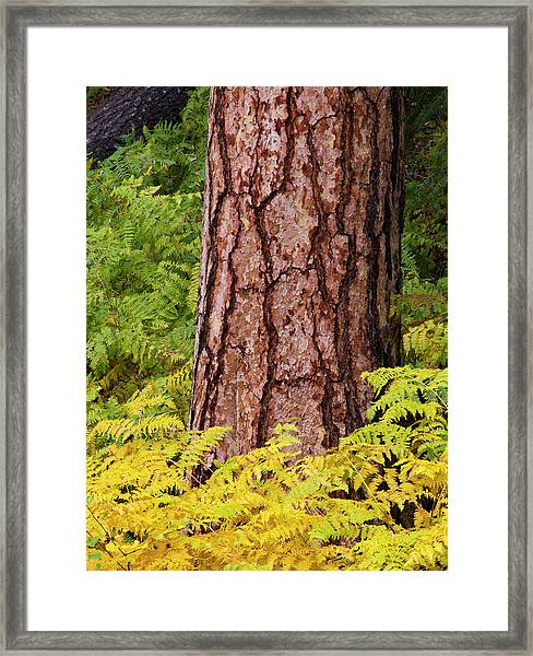 Usa, Washington State, North Cascades Framed Print by Terry Eggers