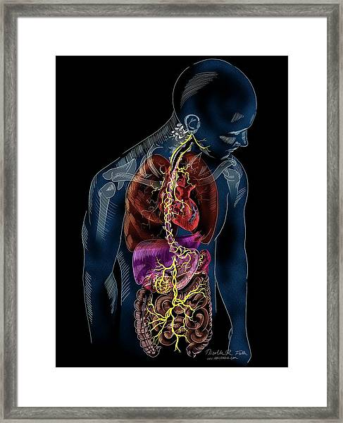 Vagus Nerve Anatomy Framed Print by Nicolle R. Fuller/science Photo Library