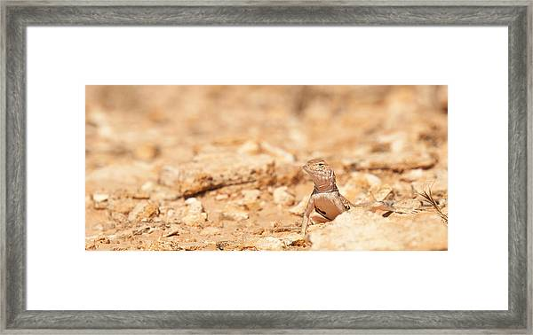 Valley Lizard Framed Print