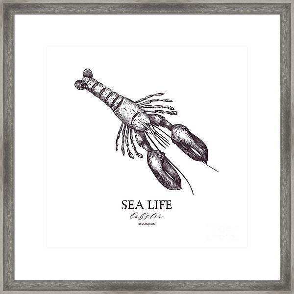 Vector Sea Life Illustration. Hand Framed Print