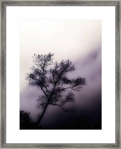 Velvet Mist Framed Print
