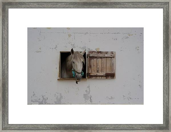 Ventania Framed Print by Carey Coombs