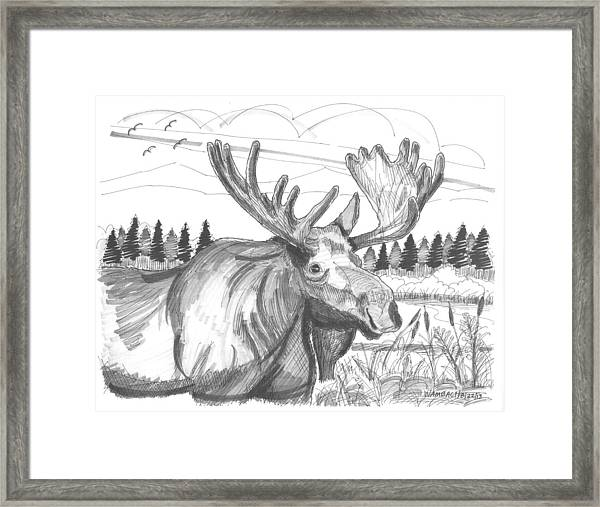 Vermont Bull Moose Framed Print