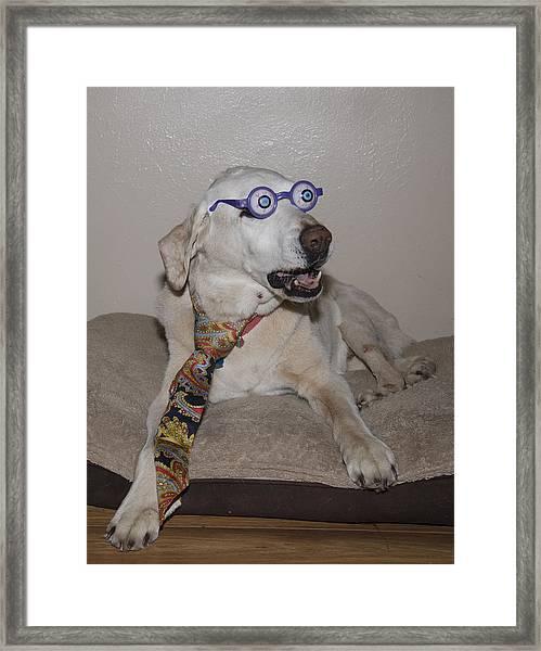 Very Intelligent Dog Framed Print
