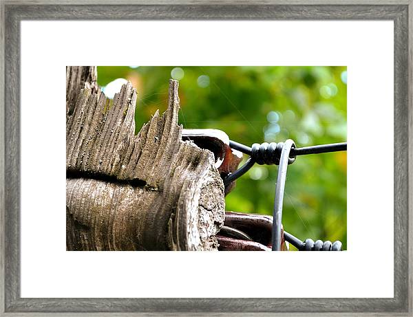 Veteran Timber Framed Print