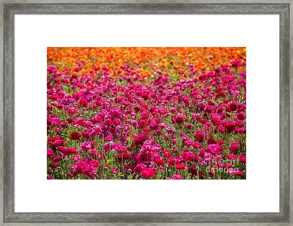Vibrant Flower Field Framed Print by Julia Hiebaum