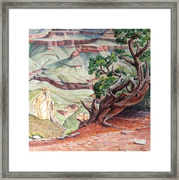 View From Cedar Ridge Trail Framed Print