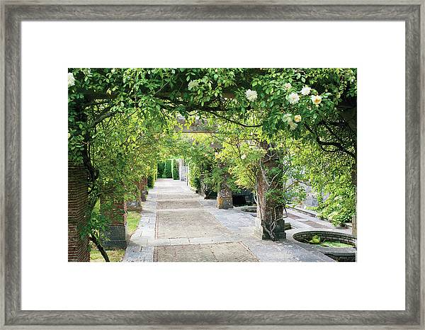 Vine Covered Columns And  Garden Path Framed Print