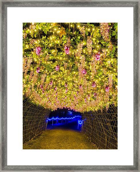 Vine Tunnel Framed Print
