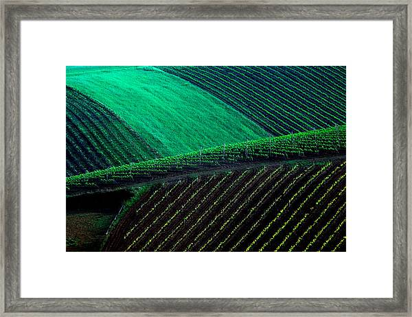 Vineyard 05 Framed Print