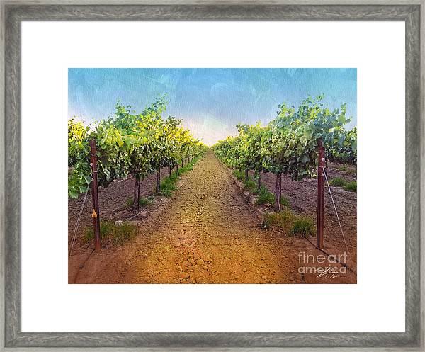 Vineyard Road Framed Print