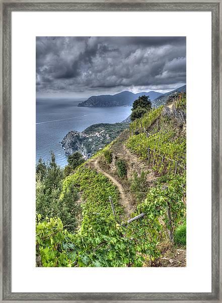 Vineyards Above Cinque Terre 1 Framed Print