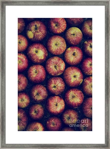 Vintage Apples Framed Print