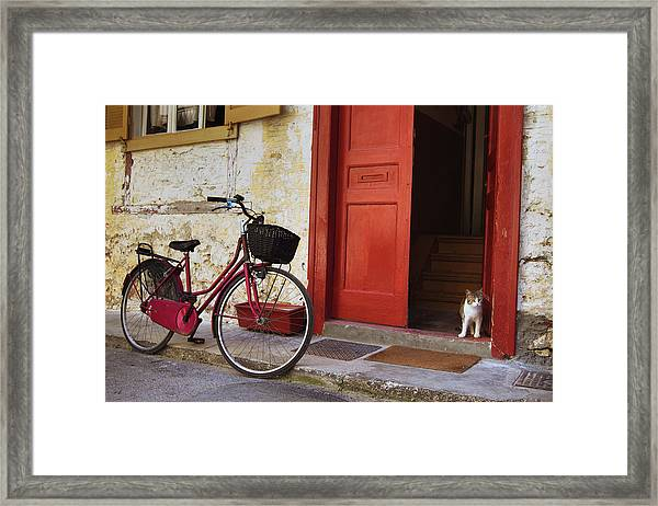 Vintage Bicycle And Cat On The Street Framed Print