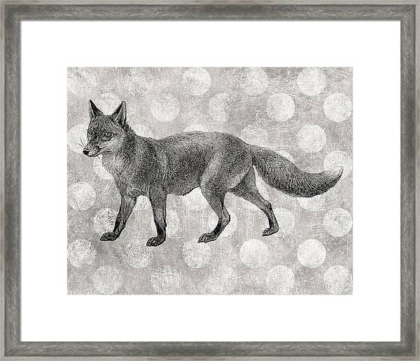 Gray Fox Framed Print by Flo Karp