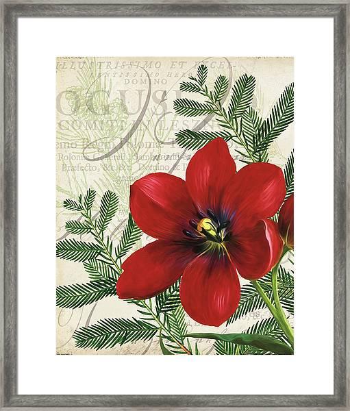 Vintage Noel IIi Framed Print by Katie Pertiet
