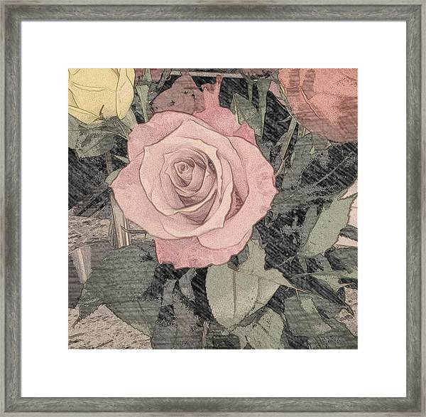 Vintage Romance Rose Framed Print