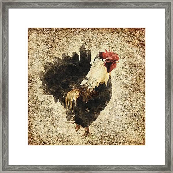 Vintage Rooster Framed Print