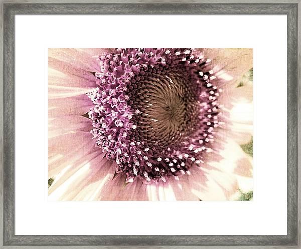 Vintage Sunflower  Framed Print