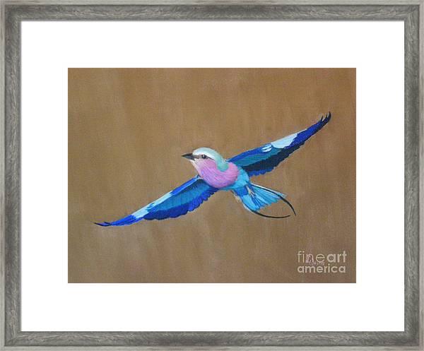 Violet-breasted Roller Bird II Framed Print
