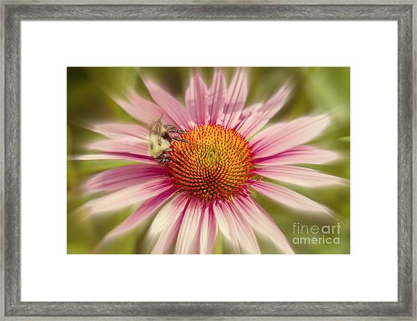 Vip Very Important Pollinator Framed Print