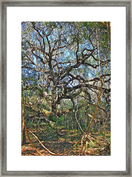 Virgin Forest Framed Print