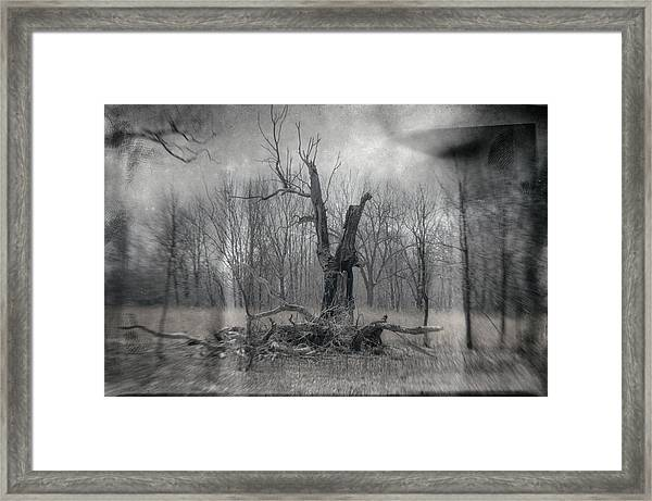 Visitor In The Woods Framed Print