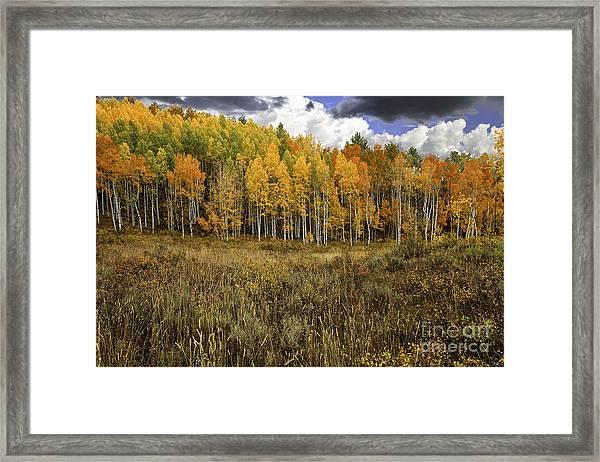 Vivid Framed Print