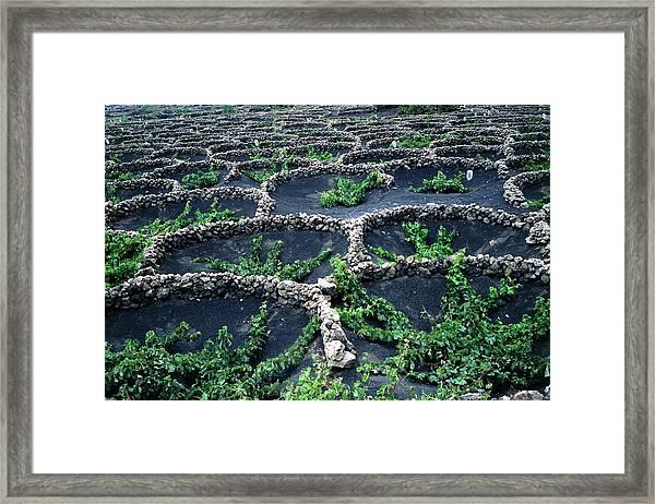Volcanic Vineyard Framed Print