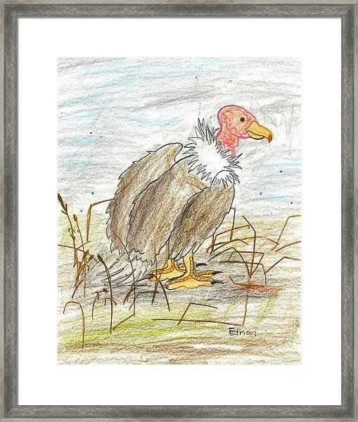 Vulture Framed Print by Ethan Chaupiz
