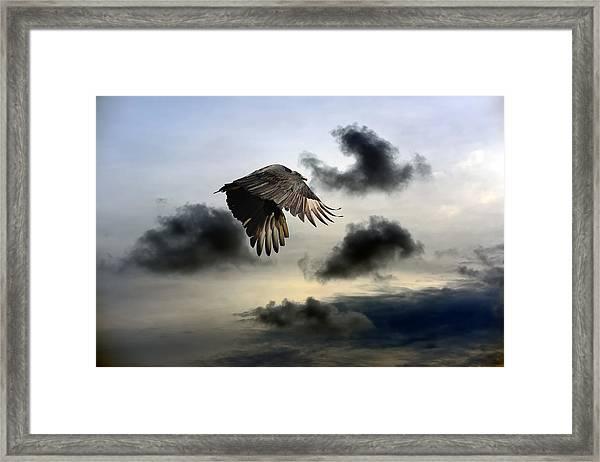Vulture Sky Framed Print