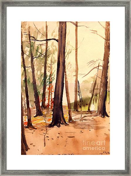 Wabigama Woods Framed Print