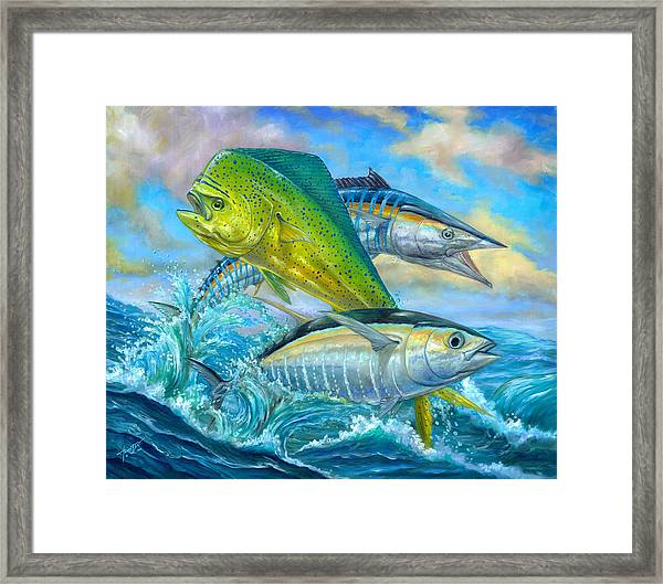 Wahoo Mahi Mahi And Tuna Framed Print