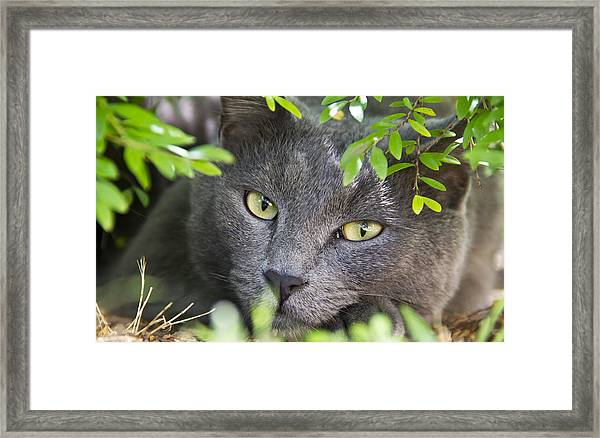 Framed Print featuring the photograph Waiting And Watching by Debbie Cundy