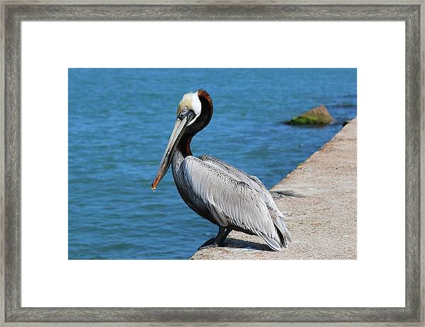 Waiting For A Fish  Framed Print